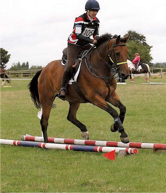 how to become a horse trainer uk